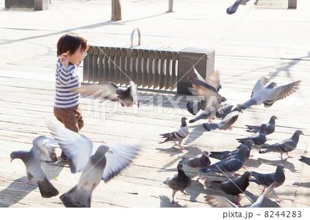 鳩を追いかける子供 8244283