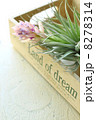 エアープランツ エアプランツ 花の写真 8278314