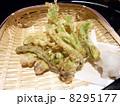 山菜天ぷら 8295177