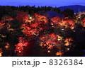ライトアップ 将軍塚 紅葉の写真 8326384