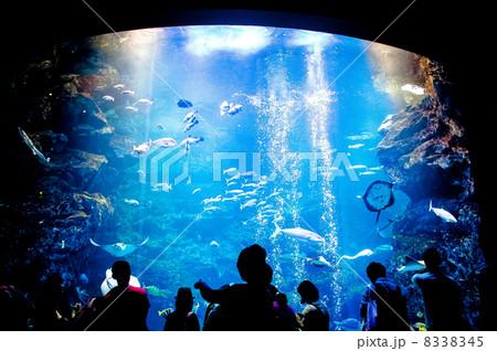 Aquarium 8338345