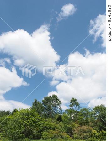 夏の高原7 8343890