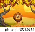ライオン 獅子 動物のイラスト 8348054