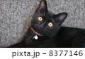猫 8377146