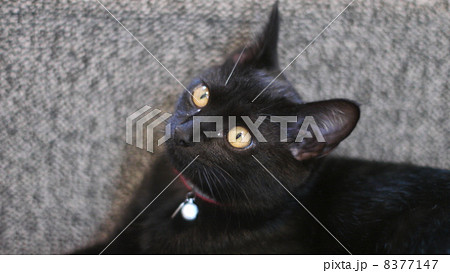 猫 8377147