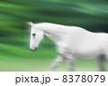 白馬 8378079