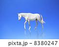 白馬 8380247
