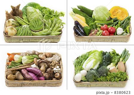 四季折々の野菜 8380623