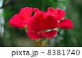 草花 8381740