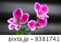 草花 8381741