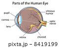 角膜 瞳 イラストのイラスト 8419199