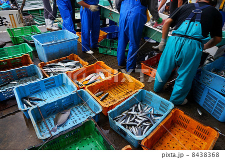 串本漁港の水揚げ 8438368