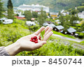 Female hand with berries and leaves of strawberry. 8450744