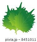 大葉 ベクター 野菜のイラスト 8451011