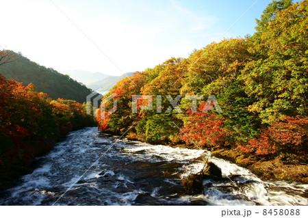 竜頭の滝 8458088