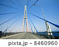 cable-stayed bridge to Russian Island. Vladivostok. Russia. 8460960