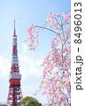 シダレザクラ 枝垂れ桜 桜の写真 8496013
