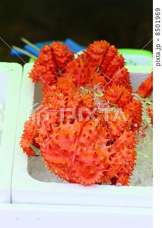 花咲蟹 8501969