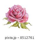 Watercolor rose 8512761