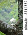 地球と自然 8514382