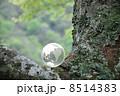 地球と自然 8514383
