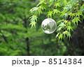 地球と自然 8514384