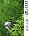 地球と自然 8514386