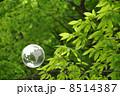 地球と自然 8514387