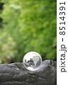 地球と自然 8514391