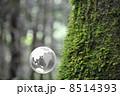 地球と自然 8514393