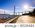 Cable-stayed bridge to Russian Island. Vladivostok. Russia. 8526484