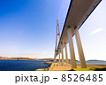 Cable-stayed bridge to Russian Island. Vladivostok. Russia. 8526485