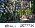 山林 杉林 林の写真 8577730
