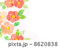 椿 8620838