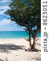 モクマオウ ウッパマビーチ 沖縄の写真 8623051