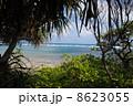 アダン 沖縄 木の写真 8623055