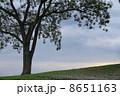 樹木 木 高原の写真 8651163