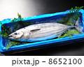 カツオ 8652100