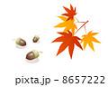 もみじ紅葉 8657222