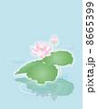 ハス 蓮 花のイラスト 8665399