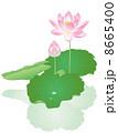 蓮華 蓮の花 花のイラスト 8665400