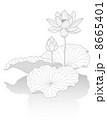 蓮華 蓮の花 ベクターのイラスト 8665401