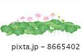 蓮華 蓮の花 花のイラスト 8665402