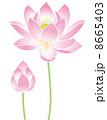 蓮華 蓮の花 花のイラスト 8665403