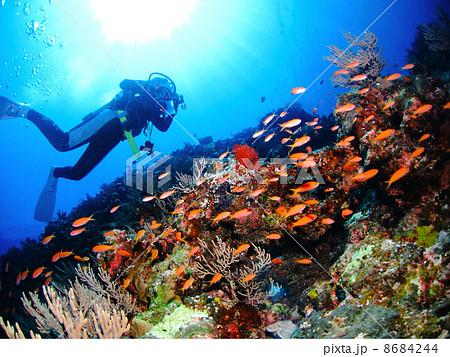 たくさんの熱帯魚が群れる岩の上を泳ぐダイバー 8684244
