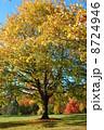 紅葉 木 もみじの写真 8724946