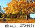 木 紅葉 もみじの写真 8724951