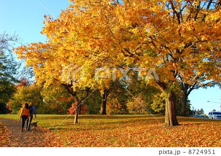 秋の紅葉と犬の散歩 8724951