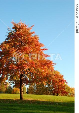 秋の紅葉 8724955