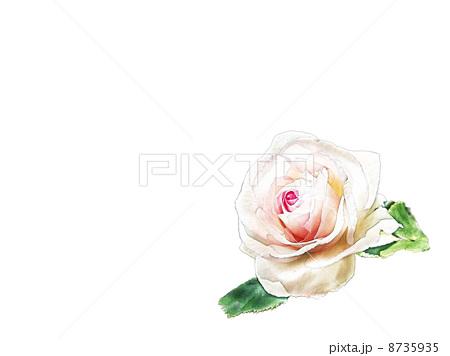 水彩風白バラ 8735935